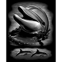 Dolphin Portrait - Reeves Medium Scraperfoil Silver