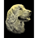 Retriever Portrait - Reeves Medium Scraperfoil Gold
